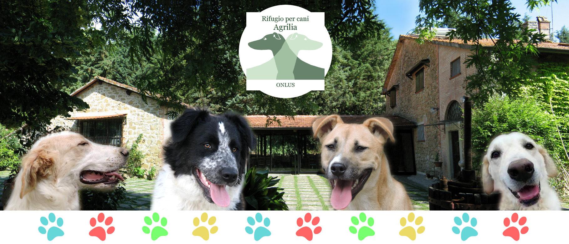 Rifugio per cani Agrilia